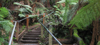 explore the outdoors in Dandenong Ranges